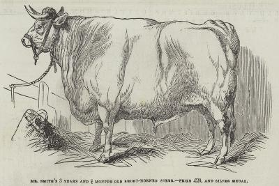 Mr Smith's 3 Years and 3/4 Months Old Short-Horned Steer, Prize £20, and Silver Medal--Giclee Print