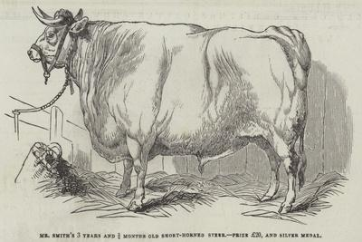 https://imgc.artprintimages.com/img/print/mr-smith-s-3-years-and-3-4-months-old-short-horned-steer-prize-20-and-silver-medal_u-l-pv5vvw0.jpg?p=0