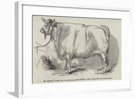 Mr Smith's 3 Years and 3/4 Months Old Short-Horned Steer, Prize £20, and Silver Medal--Framed Giclee Print