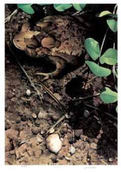 Mr. Toad-Carl Arlen-Limited Edition