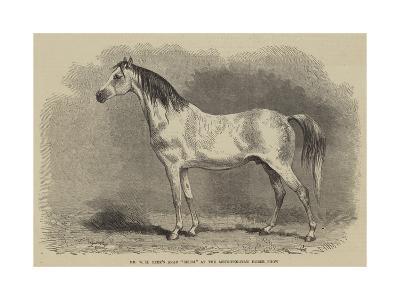 Mr W H Peek's Arab Selim at the Metropolitan Horse Show--Giclee Print