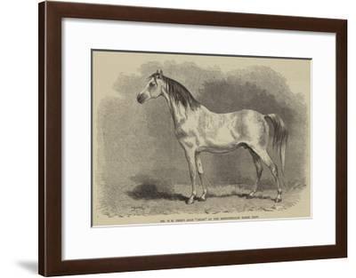 Mr W H Peek's Arab Selim at the Metropolitan Horse Show--Framed Giclee Print