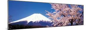 Mt Fuji Cherry Blossoms Yamanashi Japan
