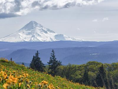 Mt. Hood from Mccall Point, Tom Mccall Nature Preserve, Columbia Gorge, Oregon, Usa-Rick A^ Brown-Photographic Print