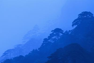 Mt. Huangshan Pine Trees-DLILLC-Photographic Print