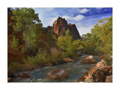 Mt. Spry with the Virgin River surrounded by Cottonwood trees, Zion National Park, Utah-Tim Fitzharris-Art Print