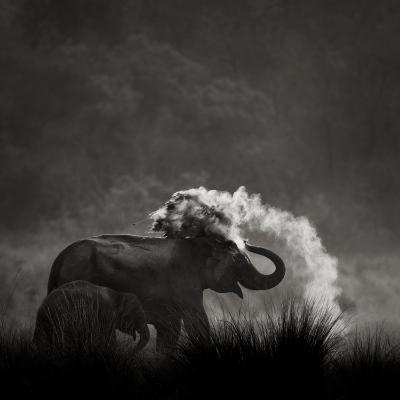 Mud Bath-Ganesh H Shankar-Photographic Print