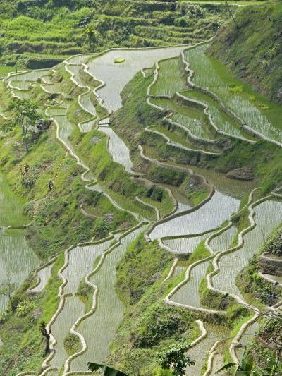 Mud-Walled Rice Terraces of Ifugao Culture, Banaue, UNESCO World Heritage Site, Luzon, Philippines--Photographic Print