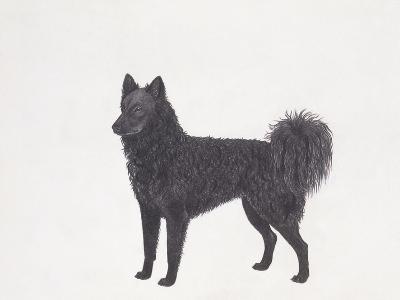 Mudi Dog--Giclee Print