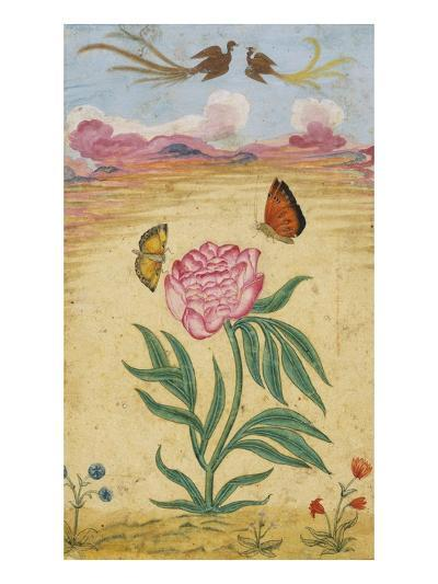 Mughal Miniature Painting Depicting a Peony with Birds of Paradise and Butterflies-Stapleton Collection-Giclee Print