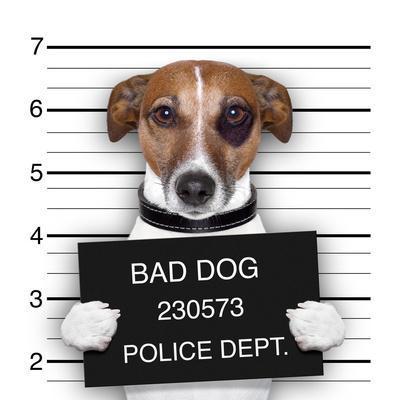 https://imgc.artprintimages.com/img/print/mugshot-dog_u-l-q1038ph0.jpg?p=0