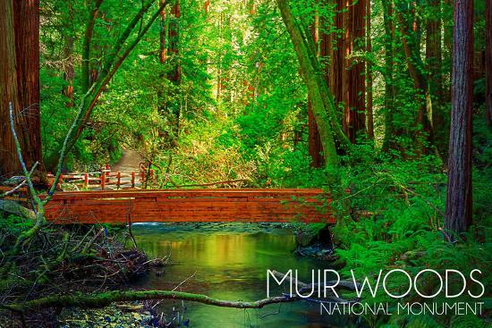 Muir Woods National Monument, California - Bridge-Lantern Press-Wall Mural