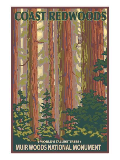 Muir Woods National Monument, California - Forest View-Lantern Press-Art Print