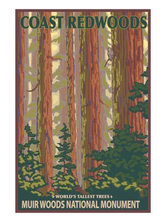 https://imgc.artprintimages.com/img/print/muir-woods-national-monument-california-forest-view_u-l-q1gpf240.jpg?p=0