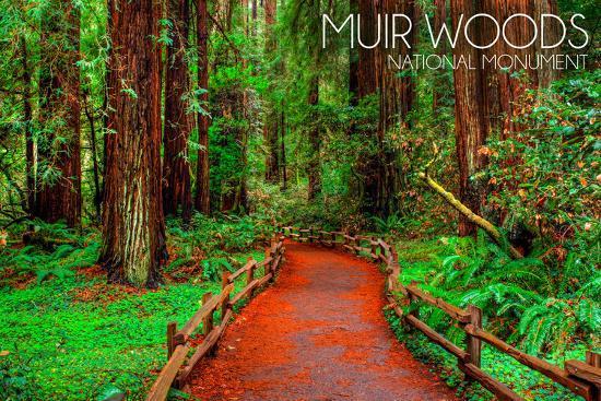Muir Woods National Monument, California - Path #1-Lantern Press-Wall Mural