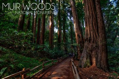 Muir Woods National Monument, California - Path #2-Lantern Press-Wall Mural