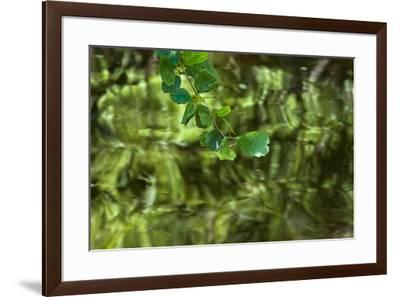 Mulberry Tree Branch Over Brook-Anthony Paladino-Framed Giclee Print