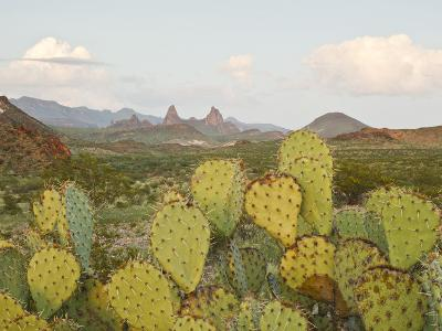 Mule Ears and Prickly Pear Cactus, Chisos Mountains, Big Bend National Park, Brewster Co., Texas, U-Larry Ditto-Photographic Print
