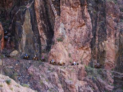 Mules Taking Tourists Along the Colorado River Trail, Grand Canyon, Arizona, USA-Kober Christian-Photographic Print
