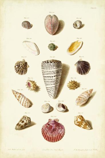 Muller Shells, Tab. III-Gabriel Muller-Art Print