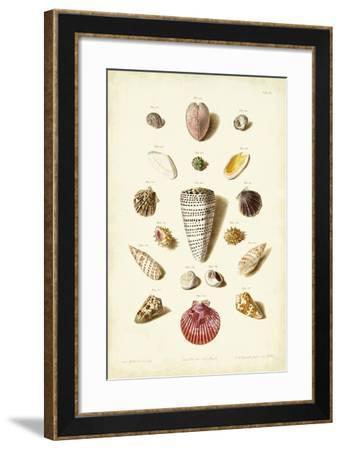 Muller Shells, Tab. III-Gabriel Muller-Framed Art Print