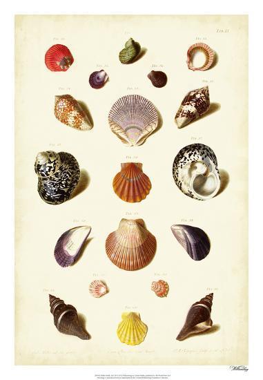 Muller Shells, Tab. XI-Gabriel Muller-Giclee Print