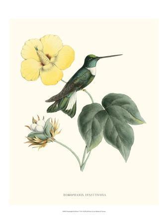 Hummingbird and Bloom I