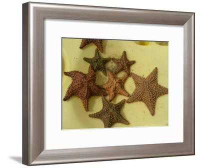 Multi-Colored Star Fish on the Sand-Todd Gipstein-Framed Photographic Print