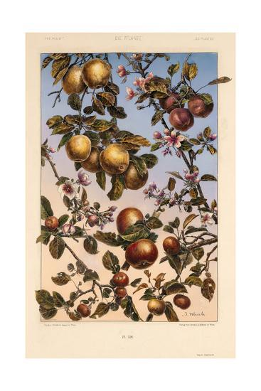 Multiple Branches of Fruit and Blossoms--Art Print