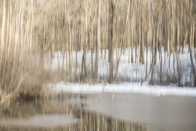 Multiple Exposure of Trees in Winter, Eagle Creek Park, Indiana-Rona Schwarz-Photographic Print