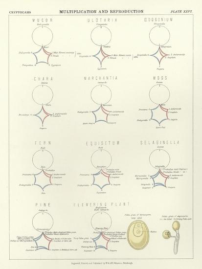 Multiplication and Reproduction--Giclee Print