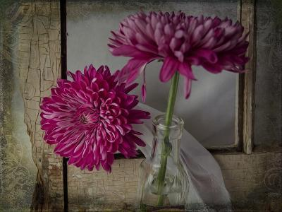 Mums by a Window-Bob Rouse-Giclee Print