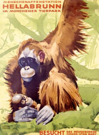 Munich Zoo, Ape