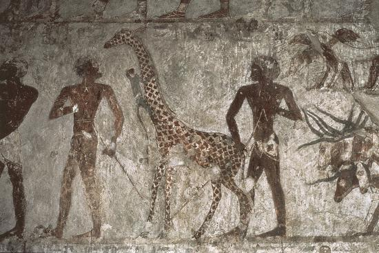 Mural Paintings of Tributes from Foreign Peoples, Detail of Giraffe from Punt--Giclee Print