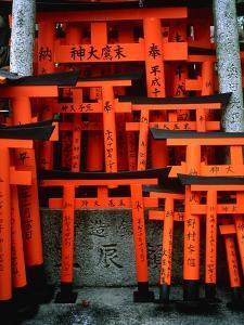 Torii Gates at Fushimi Inari Shrine, Japan, Kyoto by Murat Taner