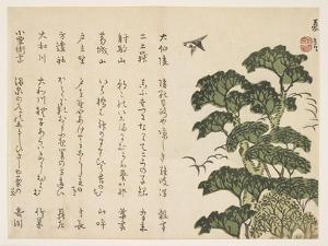 Big Tree and Birds, C.1830-44 by Murata Kagen
