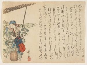 Tea Pickers, C.1830-44 by Murata Kagen