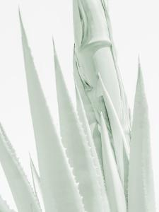 Agave Abstract 6 by Murray Bolesta