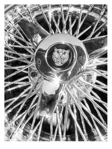 Jaguar Spokes by Murray Bolesta