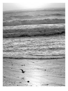 Pacific Ocean Seascape #22 by Murray Bolesta