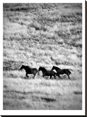murray-bolesta-ranchland-4-bw