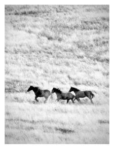 Ranchland #4 Bw by Murray Bolesta