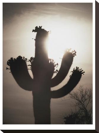 murray-bolesta-saguaro-sunrise-10
