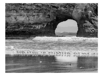 Seabirds And Sea Arch