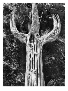 Spent Saguaro #2 by Murray Bolesta