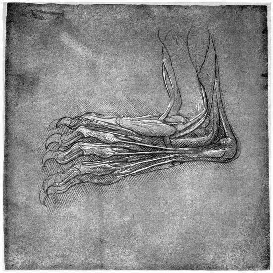 Muscles and Sinews in a Foot, Possibly of a Hare, Late 15th or Early 16th Century-Leonardo da Vinci-Giclee Print