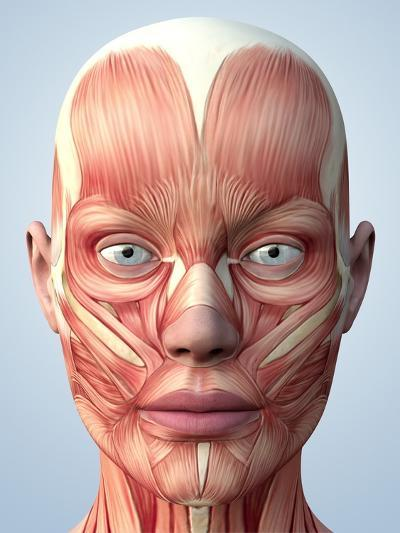 Muscular System of the Head-Roger Harris-Photographic Print