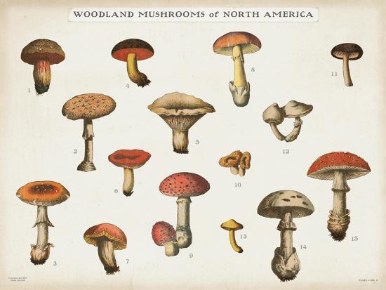 Mushroom Chart I light-Wild Apple Portfolio-Art Print
