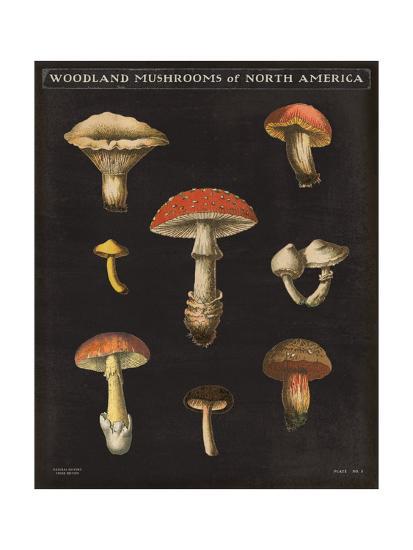 Mushroom Chart II-Wild Apple Portfolio-Art Print