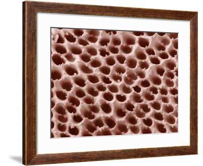 Mushroom Surface, SEM-Susumu Nishinaga-Framed Photographic Print